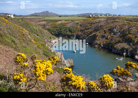 Porthclais harbour and headland near St Davids at Pembrokeshire Coast National Park, Wales in May - Stock Photo