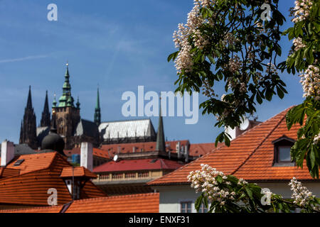 Prague Castle Spring, blooming horse chestnut tree, Czech Republic - Stock Photo