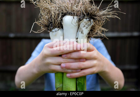 A happy boy with fresh grown organic leeks picked from the garden - Stock Photo