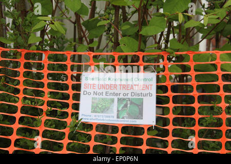 Do Not Enter sign on property invaded by Japanese Knotweed in Sheffield - Stock Photo