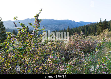 Sunrise in the Nevada California border on the edge of the Sierra Nevada Mountains on a print morning - Stock Photo