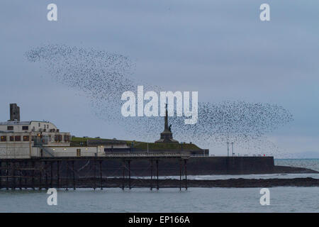 Common Starling (Sturnus vulgaris) roosting flock in flight over the pier and town war memorial at dusk.  Aberystwyth. - Stock Photo
