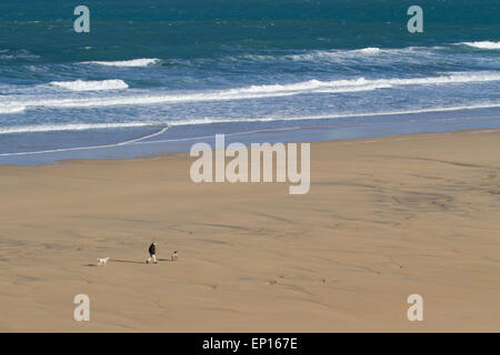 Man walking two dogs on a sandy beach, St. Ives Bay, Cornwall, England. March. - Stock Photo