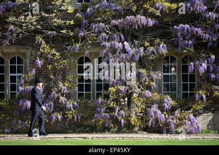 A porter at Jesus College Cambridge walking past the wall of wisteria in the First Court - Stock Photo