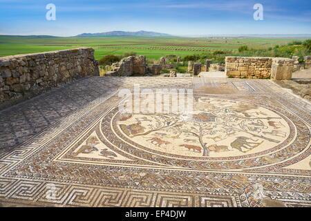 Volubilis, ancient Roman city in Zerhoun Mountains, near Fes. View to the floor mosaic in Orpfeus house. Morocco - Stock Photo