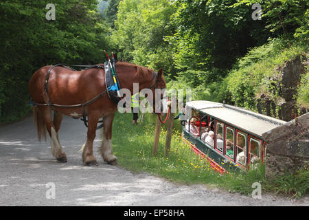 One of the horses which draws a boat on the canal in Llangollen waiting for the boat to go under a bridge - Stock Photo