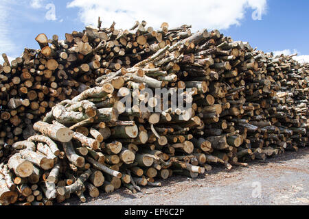 A pile of cut logs drying in the sun. Woodpile  sourced from sustainably managed woodlands. Timber trees felled - Stock Photo
