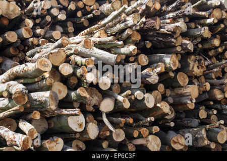 A pile of cut logs drying in the sun. Woodpile  sourced from sustainably managed woodlands. Timber trees woodyard - Stock Photo