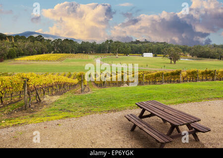 Beautiful Vineyard in Yarra Valley, Victoria, Australia in autumn - Stock Photo