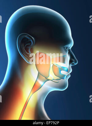 Human Throat Anatomy on black background - Stock Photo