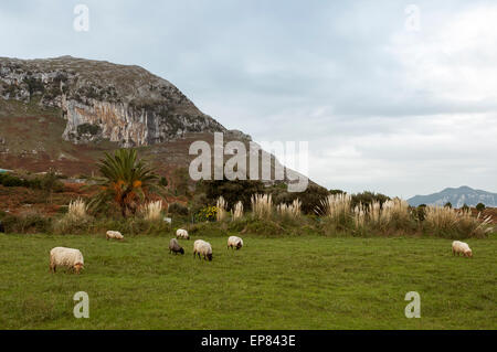 A flock of sheep grazing on the hill. Sonabia, Cantabria, Spain, Europe. - Stock Photo