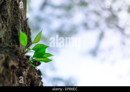 Green buds growing from a tree trunk in Spring - Stock Photo
