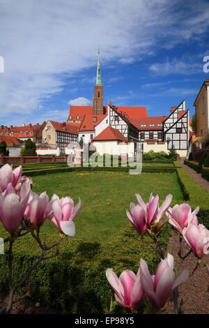 Magnolia in a Garden on Cathedral Island, Wroclaw, Silesia, Poland, Europe - Stock Photo