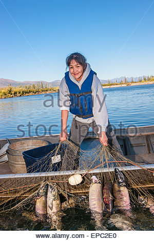 Alaska native female standing in a motor boat checking a net full of salmon, Shungnak, Arctic Alaska, summer - Stock Photo