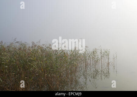 detail of reeds in morning haze at Altausseer See, Styria, Austria - Stock Photo