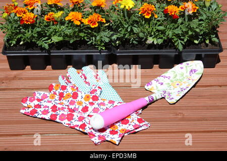 Marigold plants with gloves and garden tools - Stock Photo