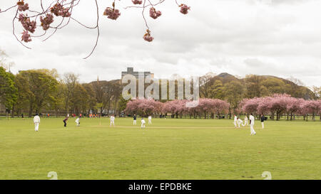 Spring cricket match being played in The Meadows public park, Edinburgh, Scotland, UK beneath Arthur's Seat - Stock Photo