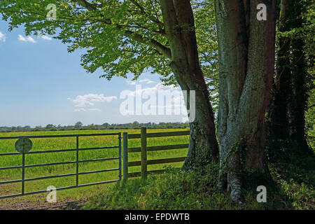 Rapeseed field on country estate - Stock Photo