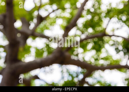 Bokeh blur from natural tree For texture background - Stock Photo