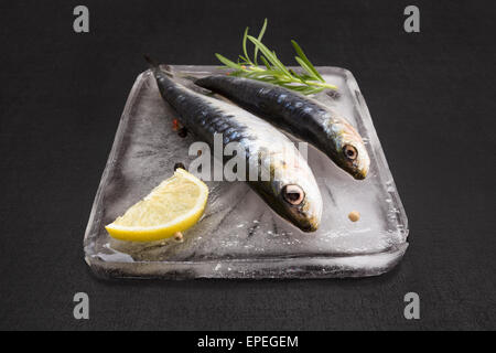 Mediterranean seafood concept. Fresh anchovy fish on ice plate with colorful peppercorn, fresh herbs and lemon on - Stock Photo