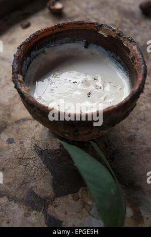 Thailand, Samui Island, Ko Samui. Rubber tree plantation. Dish of raw white latex sap. - Stock Photo