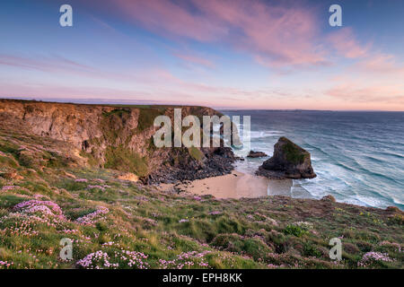 Sunset over flowering Sea Thrift growing on cliffs above Bedruthan Steps - Stock Photo