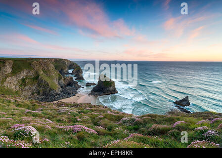 Sunset over clumps of flowering Sea Thrift growing on cliffs above Bedruthan Steps - Stock Photo