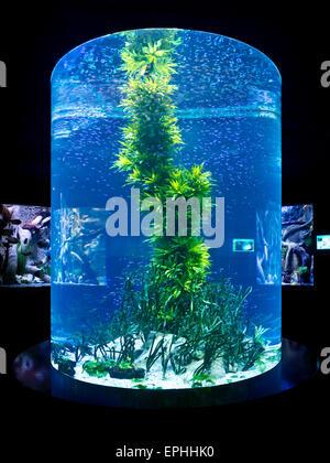 Aquarium im Loro Parque in Puerto de la Cruz - Stock Photo