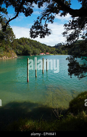 Omaha Cove, Leigh, North Auckland, North Island, New Zealand - Stock Photo