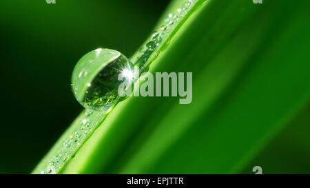 Macro of rain dropp. Nature composition. - Stock Photo