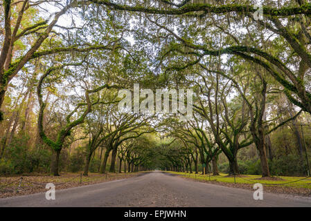 Oak tree lined road to the Wormsloe Plantation Historic Site near Savannah, Georgia. - Stock Photo