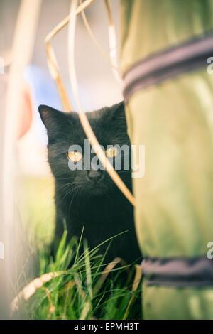 Black cat hiding in the garden - Stock Photo