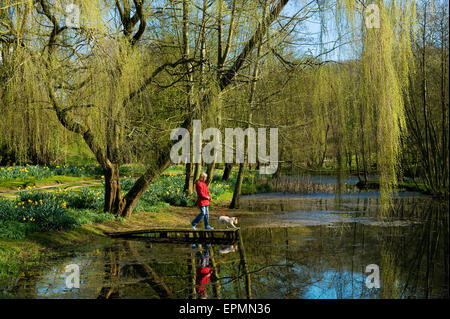 A woman and dog on a jetty on a lake, under a large weeping willow tree. - Stock Photo