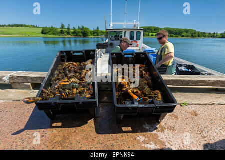 Lobster fishery in rural Prince Edward Island, Canada. - Stock Photo