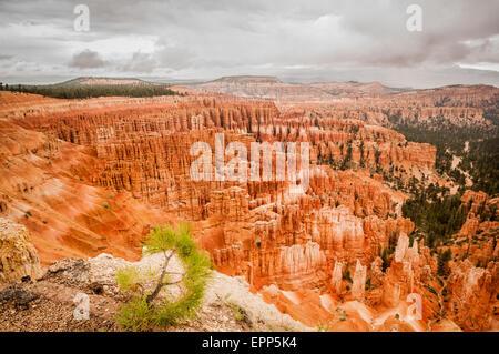 Bryce Canyon red amphitheater west USA utah 2013 - Stock Photo