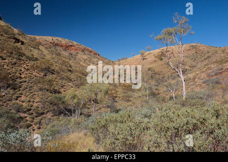 Vegetated valley at Ormiston Gorge in an arid region of West MacDonnell Ranges, Northern Territory, Australia - Stock Photo