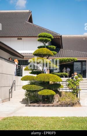 Florida Del Ray Beach Morikami Museum & Park Roji-En Japanese Gardens of Drops of Dew manicured tree rear museum - Stock Photo