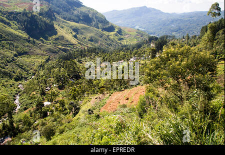 Landscape view of forested valley and farmland, Ramboda, near Nuwara Eliya, Central Province, Sri Lanka, Asia - Stock Photo