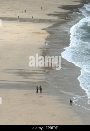 Dog walking on a beach near St Ives Cornwall in winter. - Stock Photo