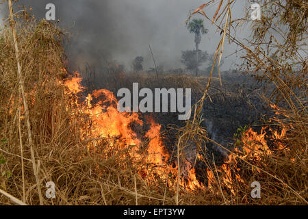 ETHIOPIA Gambela, Abobo, farm land of company Saudi Star Agricultural Development owned by Mohamed al-Amoudi , burning - Stock Photo