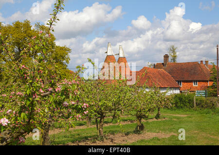 Picturesque springtime in Kent with traditional Apple Blossom and Oast Houses, England, Britain, UK, GB. Apple orchard - Stock Photo