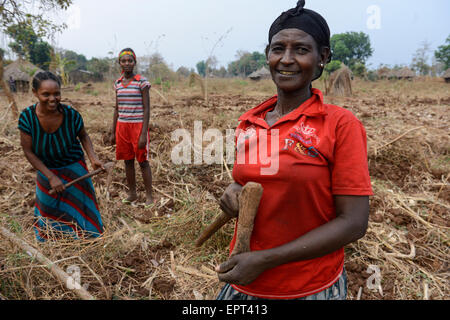 ETHIOPIA Gambela, small scale farmer in village near the large farm of Saudi Star, women harvest cassava, the people - Stock Photo