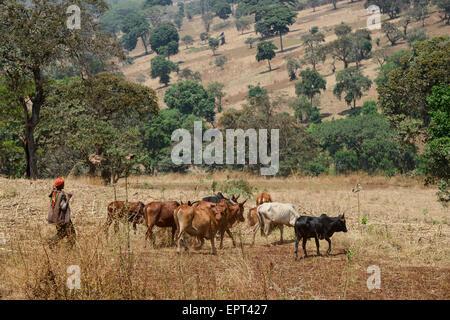 ETHIOPIA Gambela, farming, cattle breeding in Highlands / AETHIOPIEN Gambela, kleinbaeuerliche Landwirtschaft, Viehzucht - Stock Photo