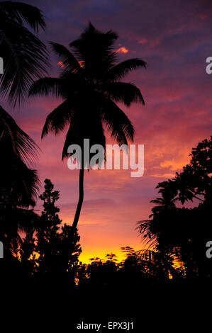 Palm trees at pinkly sunset, Silhouette - Stock Photo