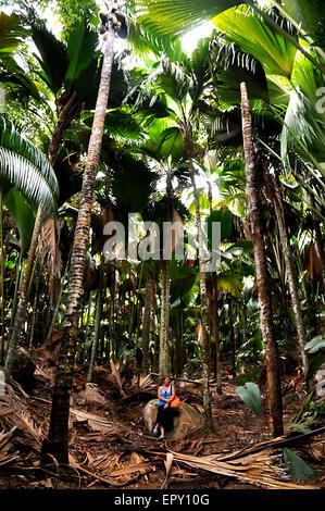 Woman sitting under the Palms of Coco de Mer in Vallée de Mai Nature Reserve park in Praslin Island. Seychelles - Stock Photo