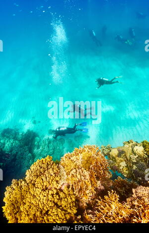 Group of scuba divers underwater, Marsa Alam Reef, Red Sea, Egypt - Stock Photo