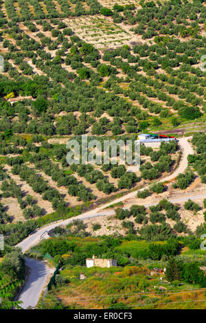 Agriculture Landscape olive groves Ubeda Andalusia Spain - Stock Photo