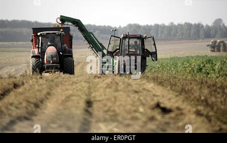 AJAXNETPHOTO. PICARDY, FRANCE. - AGRICULTURE - HARVESTING POTATOES. PHOTO:JONATHAN EASTLAND/AJAX REF:D132309_3530 - Stock Photo