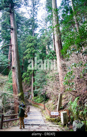 Japan, Murou-ji temple. Narrow trail, path going through very tall Japanese cedar trees, from pagoda to hall, (both - Stock Photo