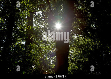 Sun's rays shining through trees, making a starburst on the camera lens - Stock Photo